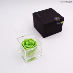 Flowercube rose stabilizzate colore verde