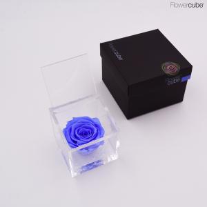 Flowercube rose stabilizzate colore azzurra