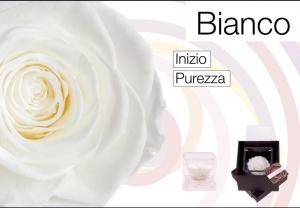 Flowercube rose stabilizzate colore bianca