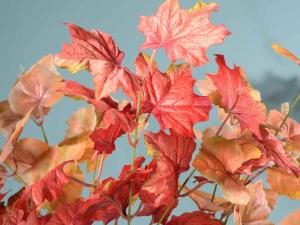 Ramo di foglie autunnali artificiali