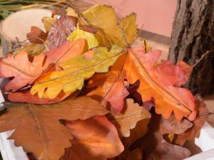 Confezione 12 foglie in carta plastificata con gambo modellabile