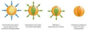 Concime a cessione controllata BARENBRUG ACTIVE NPK 15-5-15 +Mg +S