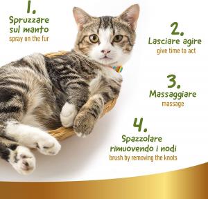 Lavaggio a secco per gatti