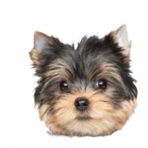 BRACCIALE TESTA YORKSHIRE / ARGENTO LUCIDO DOG FEVER